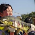 庄川鮭祭り2016!鮭ナベ美味かった!