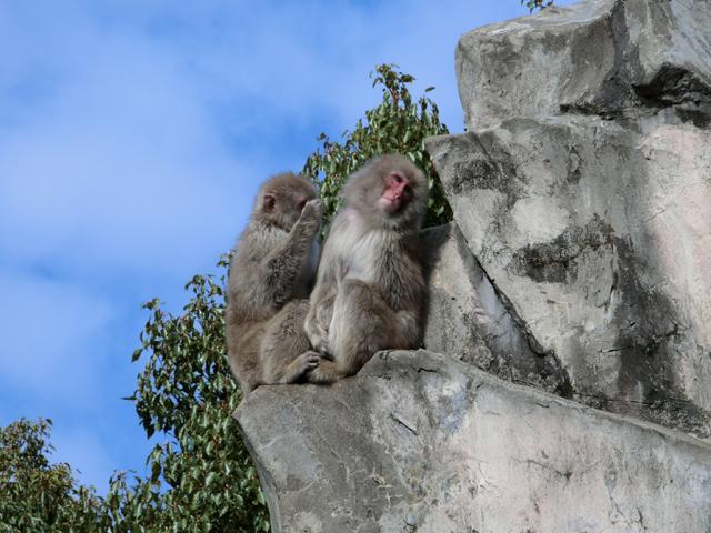 上野動物園 さる