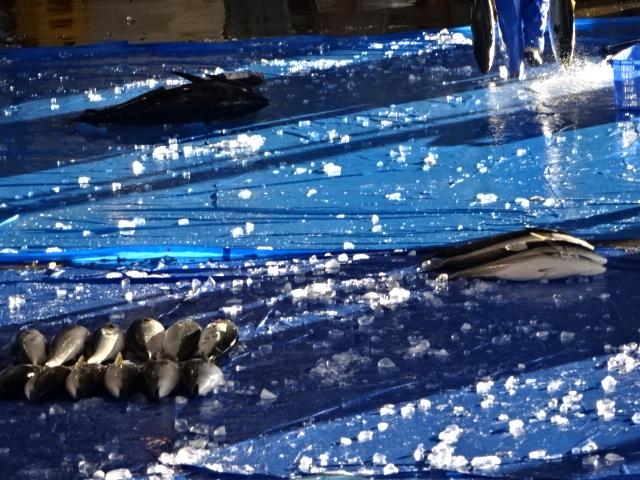 氷見魚市場食堂