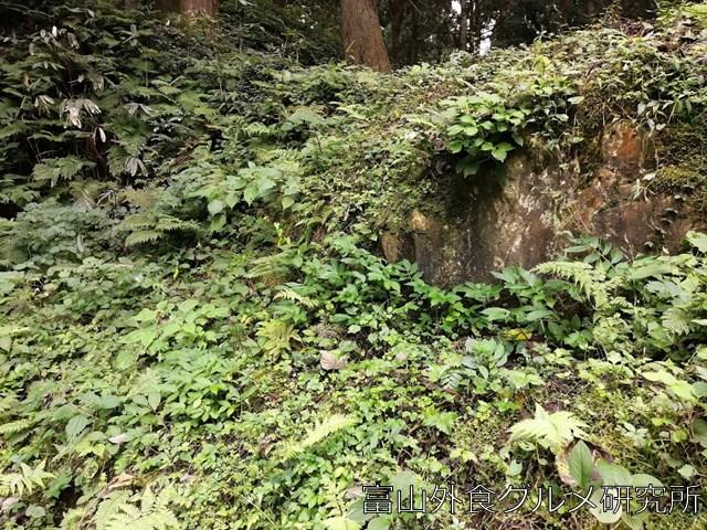 増山城 石垣跡