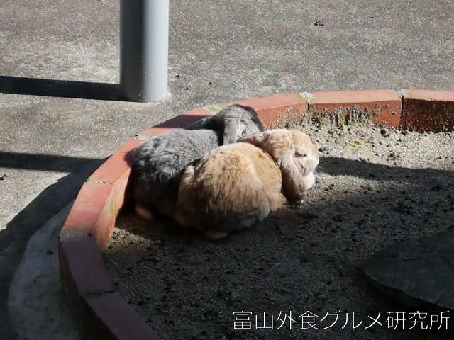 稲葉山 ふれあい動物広場